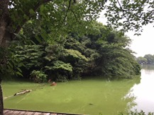 I釣り池③